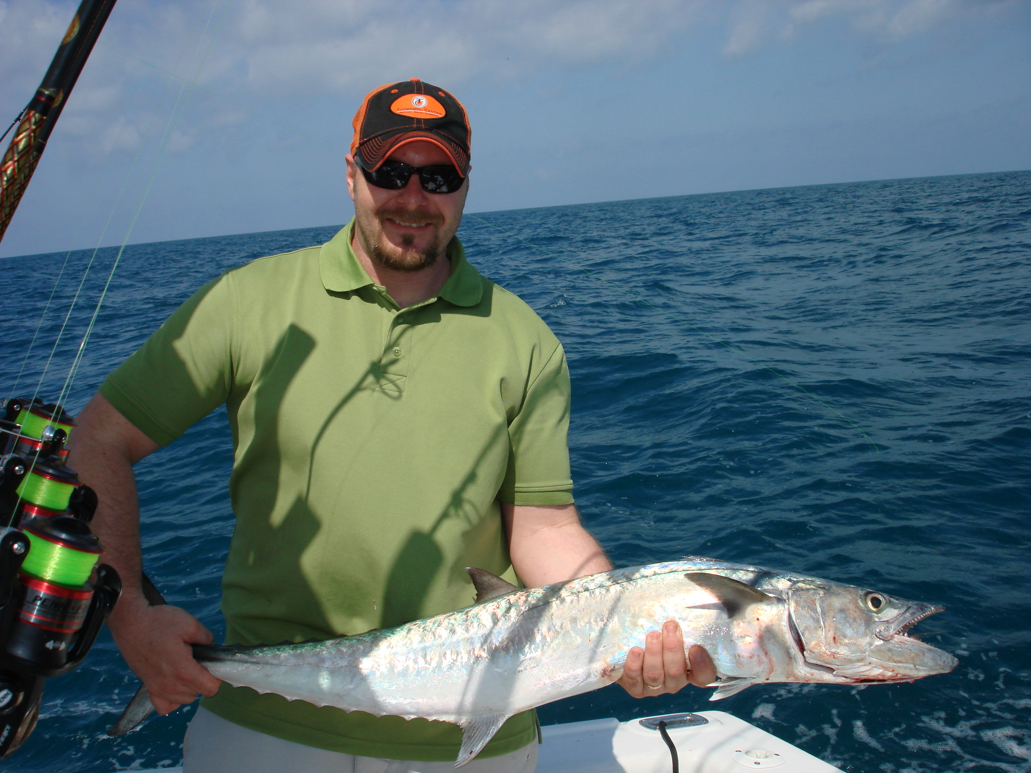 kingfish and sharks 001.jpg