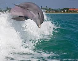 sightseeing dolphin tours